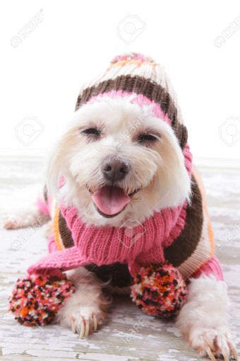 13394041-happy-dog-wearing-a-warm-woollen-turtleneck-sweater-scarf-and-matching-beanie-hat-with-pom-poms-in-c