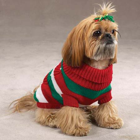 dog-in-sweater-13